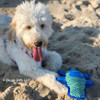 zoey loves her beach day fun with rascals fetch alligator dog toy wearing pro waterproof harness