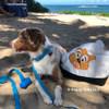 Beach day with Fluffy - love the aqua Coastal Pet Pro Waterproof Adjustable Dog Collar (12601)