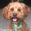 Kona loves his pro waterproof dog collar