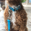 Kona Coastal Pet Pro Waterproof Collar and Leash Aqua