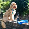 Miller wearing Coastal Pet Waterproof Adjustable Dog Collar and Leash in Aqua color