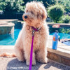Lilly wearing her Coastal Pet Pro Waterproof Adjustable Collar And Leash