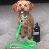 Kona loves his pro waterproof leash