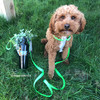 Kona wearing Coastal Pet Pro Waterproof dog leash and harness set in lime
