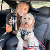 Mylo and Cailin going for a car ride with Bergan Auto Harness