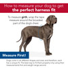 Helpful Sizing Information Bergan Auto Harness