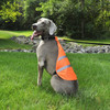 Coastal Pet Safety Vest on dog in the park