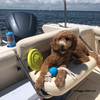 Charley boating with Coastal Pet Pro Fit Dog Toys