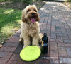 Miller loves his Pro Fit Flying Disc Dog Toy