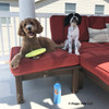 Charley and Moo lets play Frisbee