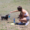 Sadie the mini dachshund loves to play at the park with Coastal Pet Pro™ Fit frisbee style flying disc dog toy