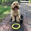 Miller loves his Pro Fit Mini Ring Dog Toy