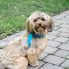 Cute pup wearing Coastal Pet Accent Microfiber harness on dog boho blue with polka dot bow