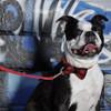 Coastal Pet Accent Microfiber Dog Collar (21401) lets go for a walk