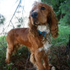 Coastal Pet Accent Microfiber Dog Collar (21401) out having fun on a beautiful day