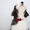 Coastal Pet Accent Microfiber Dog Collar (21401) singing a solo our friend