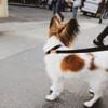 Out for a walk wearing Coastal Pet Accent Microfiber Dog Leash Mod Black