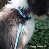 Close Up Of Henry Wearing Coastal Pet Ribbon Weave Teal Gradient Chevrons Collar and Leash