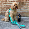 millerthelabradoodle wearing Coastal Pet ribbon weave harness and leash set