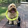 Miller loves his Pro Fit Mega Ring Dog Toy