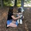 Henry the sheepadoodle Mom putting on his Coastal Pet Inspire leash and harness