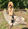 Miller taking a hike wearing Circle T latigo leather with brass hardware leash and collar