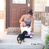 Sadie the mini dachshund loves to play with her mom and her Rascals Grunt dog toys