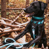 K9 Explorer Brights Ocean collar, harness and rope leash