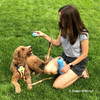Charley Girl Playtime wearing Life Is Good Ribbon Overlay leash  from doggygifts