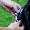 How to use a personalized hideaway flea collar cover