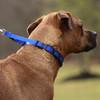 Coastal Pet Natural Control Training Collar In Use