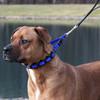 Coastal Pet Natural Control Training Collar on Dog