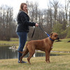 Coastal Pet Natural Control Training Collar Walking Dog