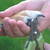 Safari by Coastal Pet Professional Stainless Steel Nail Trimmer, Small to Medium