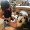 Henry and Mom using Safari Professional Dog Nail Trimmer