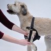 Easy Rider Adjustable Car Dog Harness