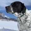 Oliver loves his Coastal Pet Metal Buckle Adjustable Nylon Dog Collar (61401) in HUN Hunter Green