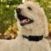 Coastal Pet Adjustable Nylon Dog Collar With Plastic Buckle Black