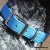 Close up Coastal Pet Double Ply Standard Nylon Dog Collar (2901) Blue Lagoon BLL