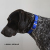 Ruger looks awesome in his Coastal Pet Double Ply Standard Nylon Dog Collar (2901) Blue BLU