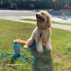 Cooper wearing Coastal Pet rope leash