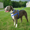 Coastal Pet Adjustable Nylon Comfort Wrap Dog Harness With Dog With Rope Dog Leash in Color Blue BLU