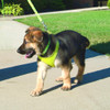 Coastal Pet Comfort Soft Wrap Adjustable Dog Harness