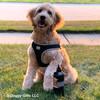 Mylo Loves His Coastal Pet Reflective Wrap Dog Harness