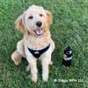 Coastal Pet Comfort Soft® Wrap Reflective Adjustable Dog Harness color black shop at doggygifts.com