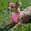 Coastal Pet Comfort Soft Adjustable Dog Harness Personalized