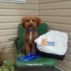 Kona wearing Coastal Pet personalized nylon dog leash and plastic buckle dog collar