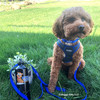 Kona wearing his Coastal Pet personalized ensemble