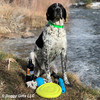Oliver Loves His Pro Fit Dog Toys and Coastal Pet Pro Waterproof Standard Dog Collar Personalized (4611E)
