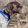 Ruger wearing his Coastal Pet Double Ply Standard Nylon Dog Collar Personalized (2901E) Blue BLU